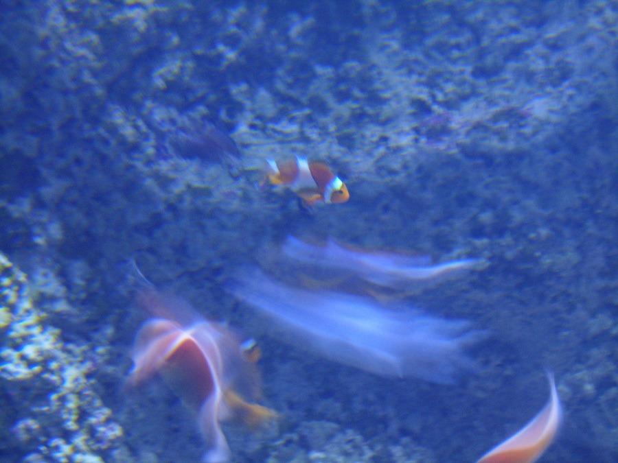 Sydney Aquarium in Darling Harbour    The Travel Tester