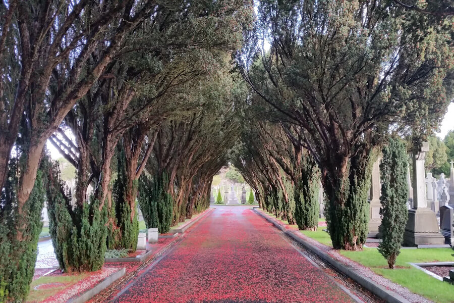 One day in Dublin? See the Highlights with these Tips!    City Guide by The Travel Tester    #CityGuide #Ireland #Dublin #VisitIreland #VisitDublin #24HGuide #Cemetery #Glasnevin