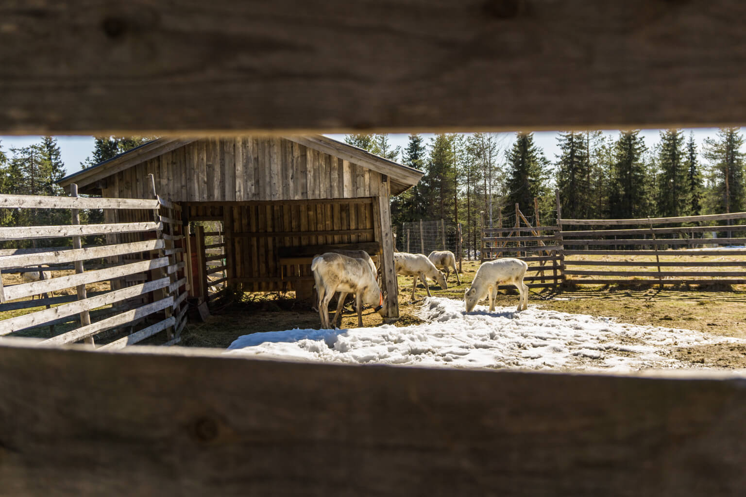 5x Things to Do in North Finland & Finnish Lapland in Summer & Spring    The Travel Tester