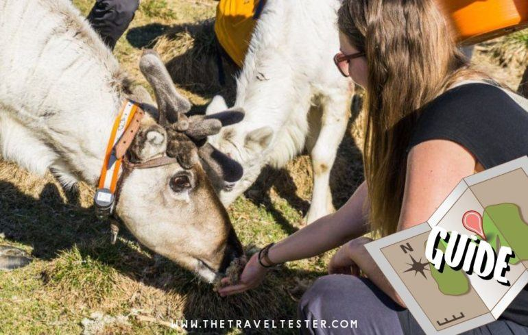 Discover Finnish Lapland in Summer And Be Amazed!    The Travel Tester