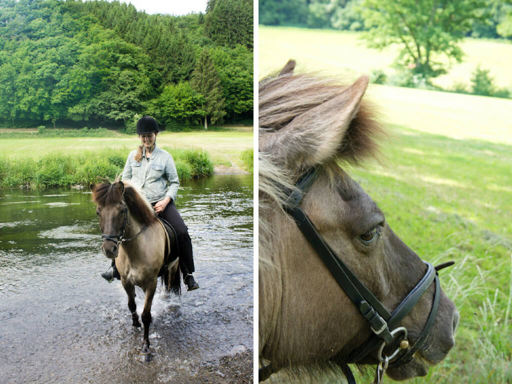 Icelandic Horse Riding Luxembourg: Discover the Ardennes in a Unique Way!    The Travel Tester    #Luxembourg #Horse #Horseriding #Travel #Ardennes