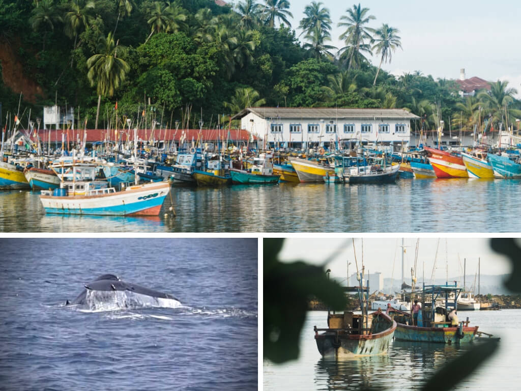 10 Best Things to Do in Sri Lanka that Will Make you Grow as a Person || The Travel Tester || #SriLanka #Asia #Travel #Beach #Ocean #Whales #WhaleWatching